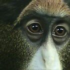 Monkey - up close and personal by Ursula Tillmann