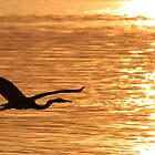 Blue heron Silhouette by Paul Lenharr II