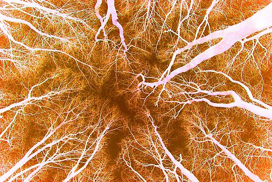 Root or Branch v 11 : Photography by Alys Griffiths by sigriff