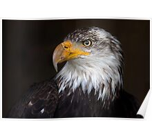 Caged Eagle Poster