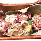 Tobacco & Roses - roses detail by Paula MacGregor
