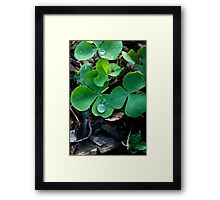 One Leaf Short Of Luck Framed Print