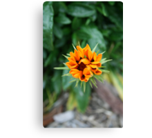 Floral Star Canvas Print