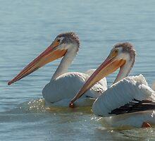 Pair of American White Pelicans by AgapeMn