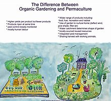 Difference Between Organic Gardening and Permaculture by AprilSKelly