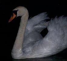 Swan in the dark by ccrcats