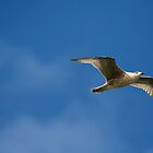 on wings of the seagull  by photogenic