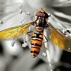 Hoverfly sc by crackerjack