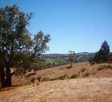 Summer in the Adelaide Hills by Keltan