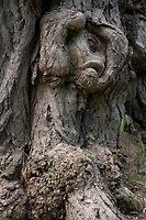 tree nymph by gruntpig