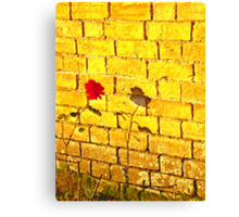 Single Red Rose.. Canvas Print