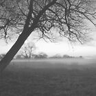 Tree in the fog by Lpixel