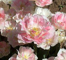 Pink Tulipa by Fred Seghetti