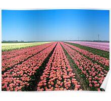 Tulips.. Tulips.. Tulips.. Poster