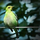 Bird on a Wire by Sheryl Kasper