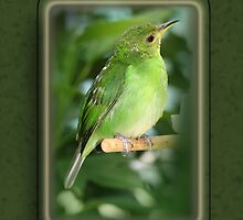 Green Honeycreeper by Sheryl Kasper