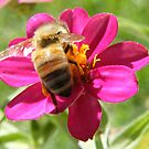 Busy  Bee 2  by jack01