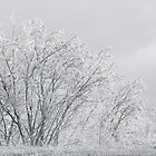 Ice Trees, Too by Brad Staggs
