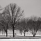 Arlington Cemetary in the Snow #2 by Brad Staggs