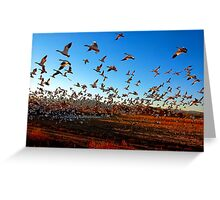 Fright Flight of the Snow Geese Greeting Card