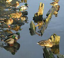 Sitting ducks by Verity Barnes
