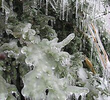 Closeup of Iced Plants by Albert Grable