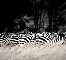 patterns in the grass by Gideon du Preez Swart