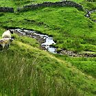 Locals - in the Yorkshire Dales by hans p olsen