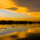 Golden Pond by Jay Ryser