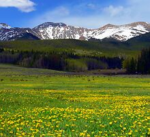 Golden Mountain Meadow by Tony L. Callahan