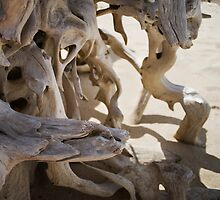 Drift wood by nsoup