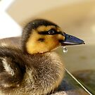 Just A Little Dribble - Rescued Duckling - NZ by AndreaEL