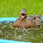 Catching Hail Stones - Rescued Duckling - NZ by AndreaEL