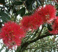 Pohutukawa Tree  by TeeAy