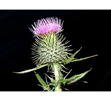 The Flower of Scotland Photographic Print
