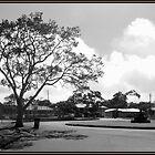 Military Tree  by Gary  Oertel