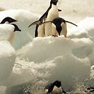 Penguin splat by Michelle Dry