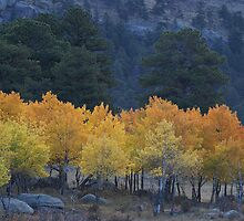 Fall Spectrum by Jay Ryser