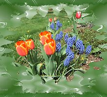 Tulips with Grape Hyacinth by Andy2302