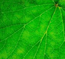 Green Veins by John Edwards