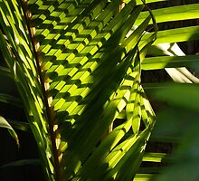 nature and structures - naturaleza y structuras by Bernhard Matejka
