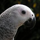 Annie the African Grey by Riaan Roux