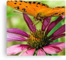 Gulf Fritillary, Butterfly Canvas Print