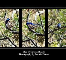 Blue Wren Sweethearts by Coralie Plozza