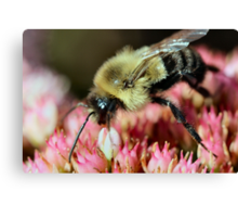 I wish she would buzz off!  :) Canvas Print