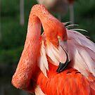 Flamingo by Jo Nijenhuis