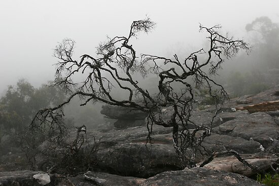 Rock Tree by Jared Revell