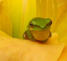 vocal frog by Belinda Cottee