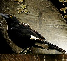 A Member of the Bird Mafia..............The Currawong by rossco