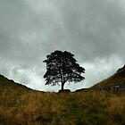Sycamore Gap by SpraggonPhotography